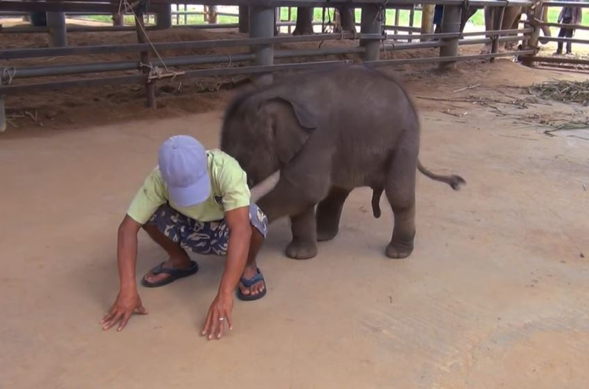 Baby elephant is getting her first bath by mom and wins over the internet
