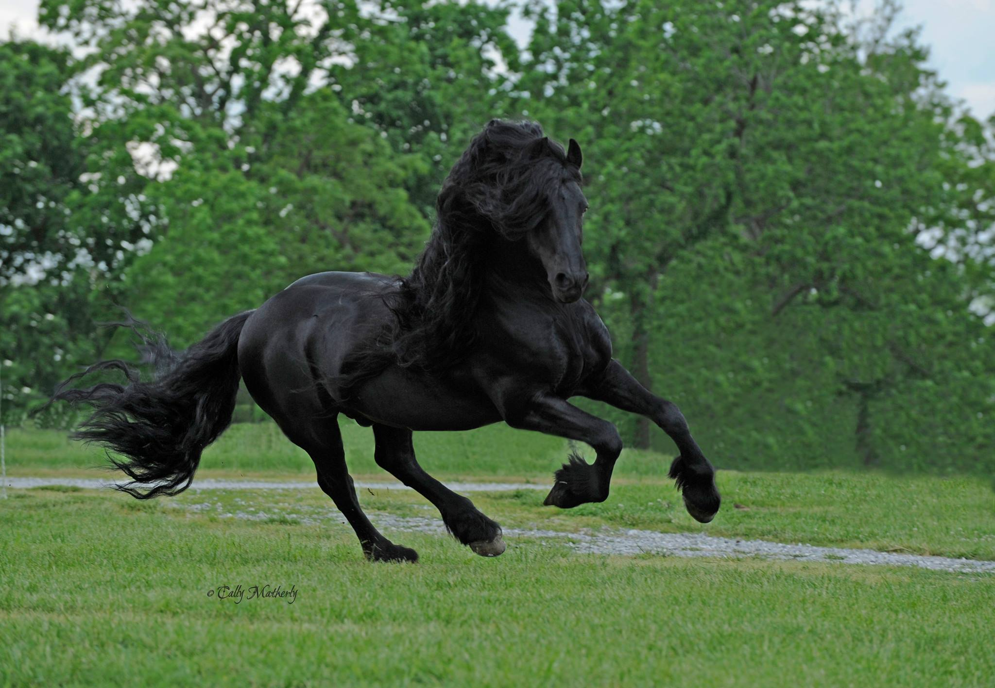 Meet Frederik The Great The Most Handsome Horse In The World