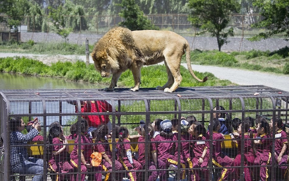 In this zoo, animals roam freely while humans are caged