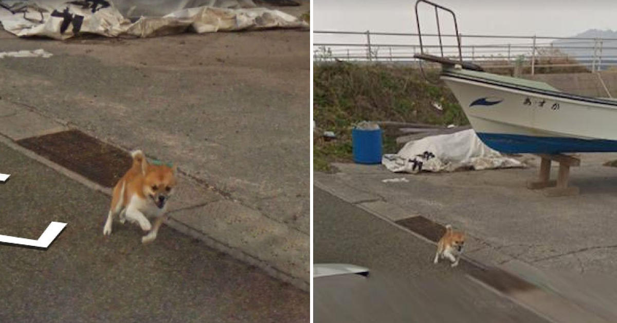 Cute little puppy 'ruined' every frame of a Google street view by chasing the camera