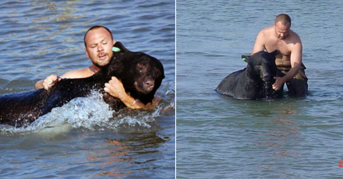 Image result for This brave man risks his life to save a 400lb drowning bear